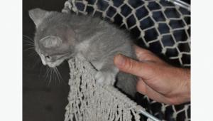 Yavru kedi sıkıştığı yerden 5 saat sonra kurtarıldı