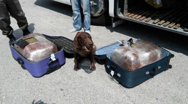 Yolcu otobüsündeki iki bavuldan 30 kilo esrar çıktı