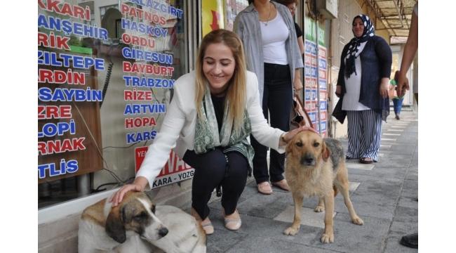 Güzide İçen Kasap: Hayvan haklarıyla ilgili yaptırımlar gelecek