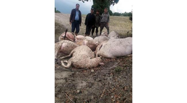 Yıldırım düşmesi sonucu 12 koyun telef oldu