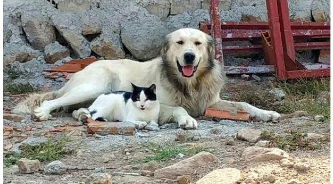 Kedi ve köpeğin dostluğu yürekleri ısıttı