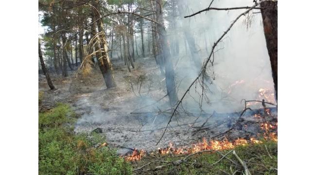 Turgutlu'daki orman yangınında 1 dönüm alan zarar gördü