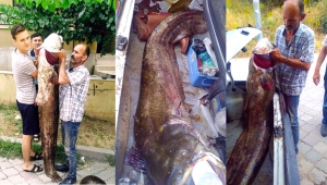 Dev yayın balığı şaşırttı