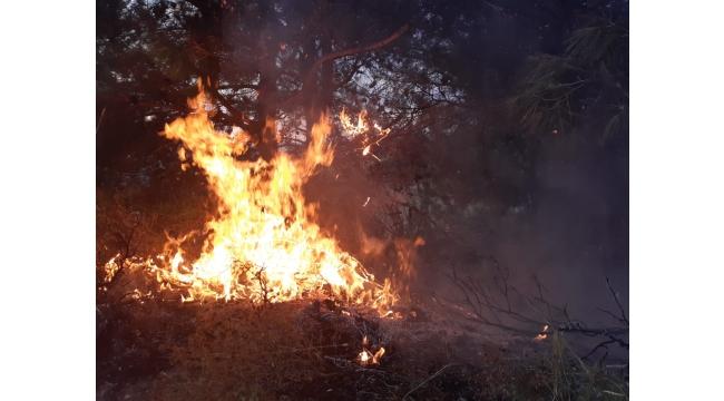Osmancık'ta orman yangını kontrol altına alındı (VİDEO)