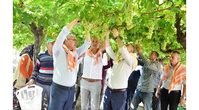 Üzümün diyarı Manisa'da ihracatlık yaş üzüme ilk makas Vali'den
