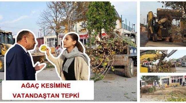 Ağaç kesimine vatandaştan tepki!
