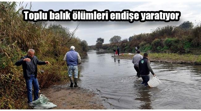 Gediz Nehri'nde toplu balık ölümleri (VİDEO)