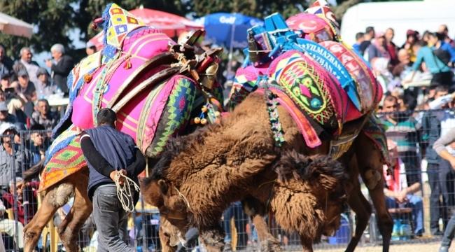 Musalar Yeniköy'de 6.kez deve güreşi heyecanı yaşanacak