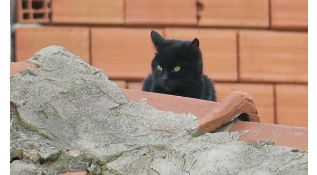 Korkan Kedi Çatıda Mahsur Kaldı