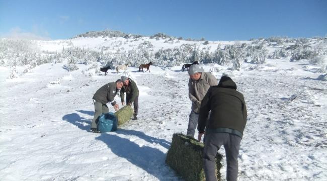 Spil'in simgesi Yılkı atlarını beslediler