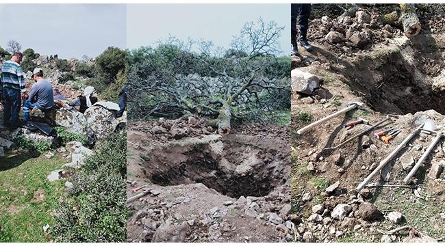 Define aramak için meşe ağacını söken 4 kişi gözaltına alındı