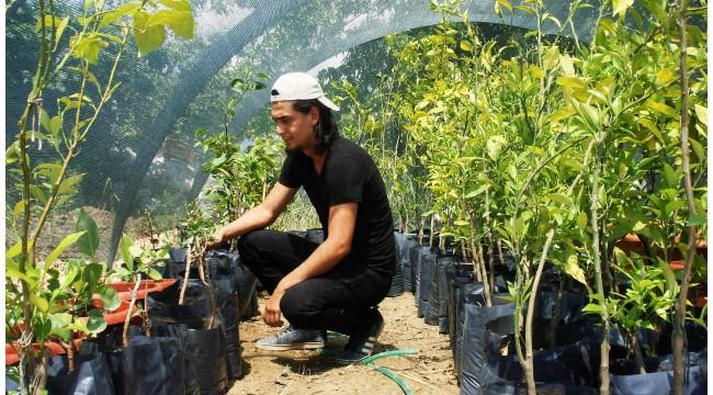 Tropikal meyve fidanları ilgi görüyor
