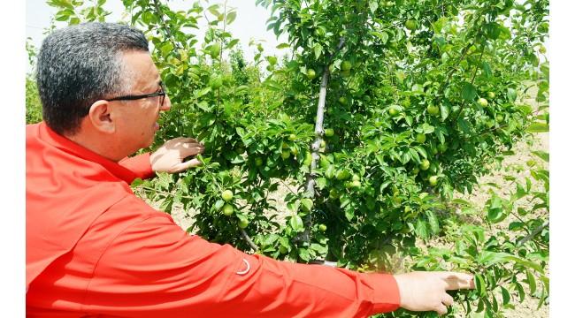 Turgutlu'da azalan papaz eriği üreticisinin yeni umudu!