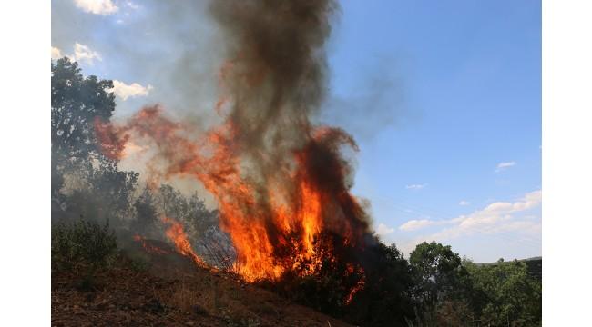 Orman yangınında 20 dekarlık alan zarar gördü