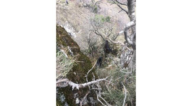İtfaiye Ekipleri Bu Kez Dağda Kalan Keçi İçin Seferber Oldu