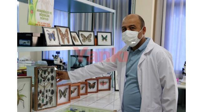 Anadolu'da çoğunluğu avcı ve tarım yararlısı 44 böcek türü keşfedildi