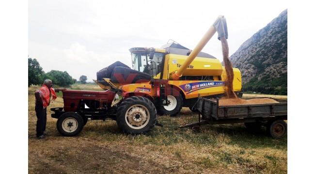 Manisa'da buğday, arpa hasat sezonu başladı