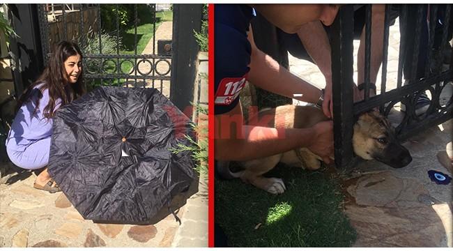 Demir kapıya sıkışan yavru köpeğe dakikalarca şemsiye tuttu