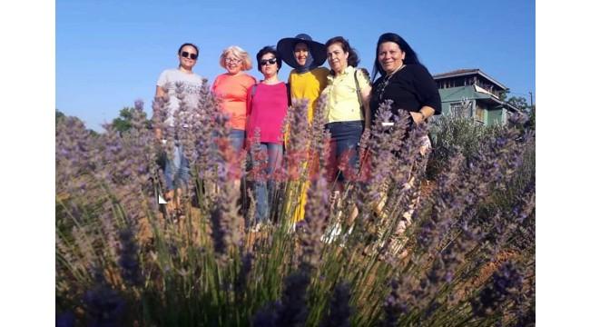 Samancı Lavanta Bahçesi ziyaretçilerini ağırlıyor