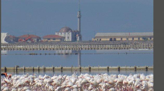 Çevre Gününde Dünyaya 17 Bin Yeni Flamingo