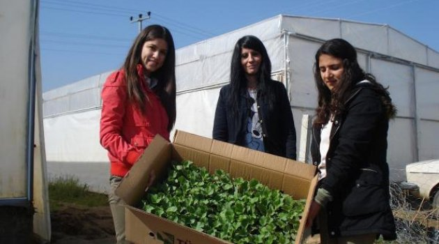 Öğrenciler organik tarım öğreniyor
