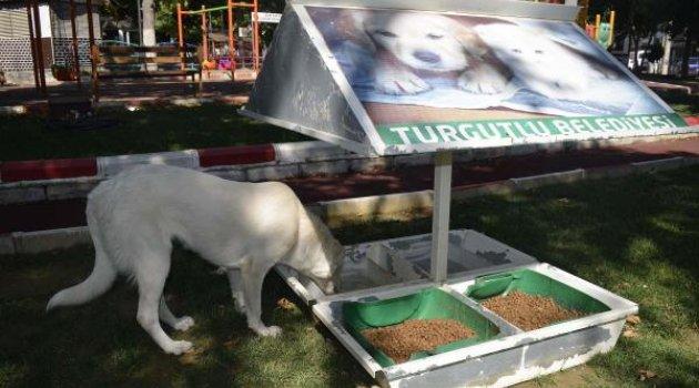 Turgutlu'dan can dostları için çalışma